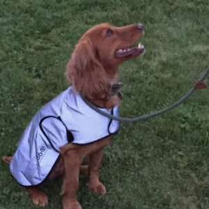 Streining Proviz - REFLECT360 Veste imperméable pour chien